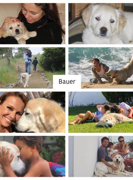 O Bauer faz hoje 13 anos.